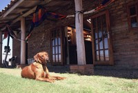 \'Shackleton\' the Rhodesian ridgeback outside the Llanganuco Lodge